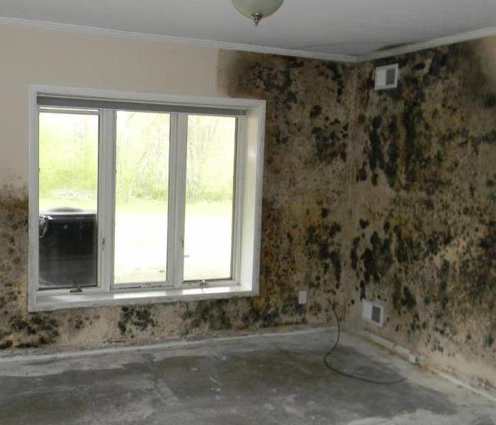 Mold Spreading in a Home